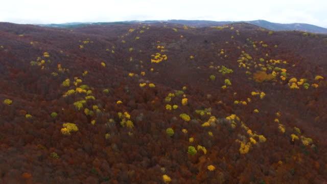 Antenne: Herbst Wald mit welken Blättern