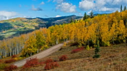 Autumn Golden Valley - Time-lapse video of Autumn clouds rolling over a golden aspen grove in a mountain valley, Routt National Forest, Steamboat Springs, Colorado, USA.
