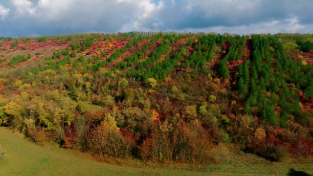 Autumn grove on the hill. Aerial view