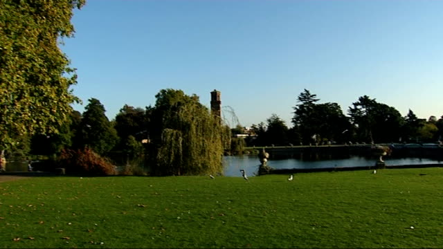 autumn heatwave continues 2992011 london kew gardens ext pan across trees and grass to lake woman along towards palm house close shot of purple... - temperate flower stock videos and b-roll footage