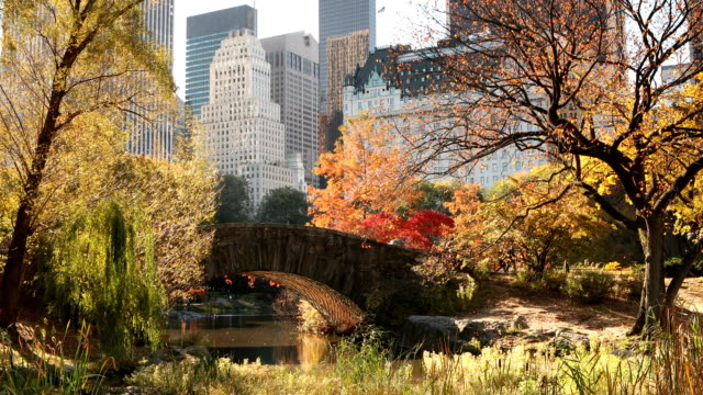 autumn in central park new york city - real time footage stock videos & royalty-free footage