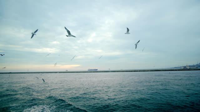 vídeos y material grabado en eventos de stock de otoño en viaje de estambul y barco en el bósforo - gaviota