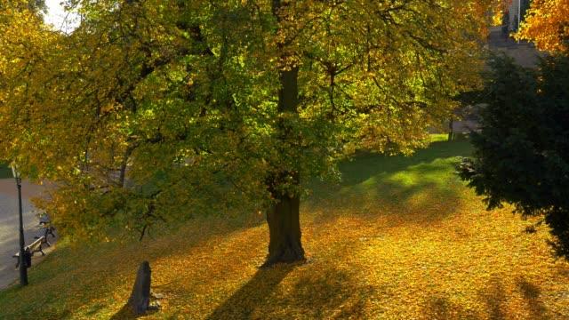 autumn in kutná hora in bohemia - praga video stock e b–roll