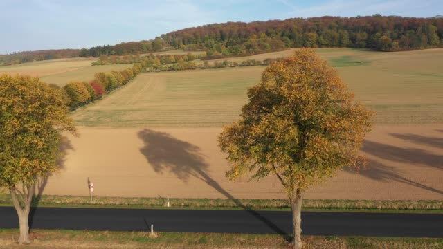 autumn in lower saxony in germany - deciduous stock videos & royalty-free footage