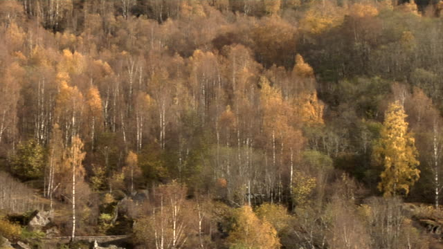stockvideo's en b-roll-footage met autumn in norway - kees van den burg