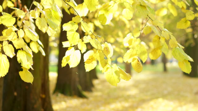 autumn in park - hoozone stock videos and b-roll footage