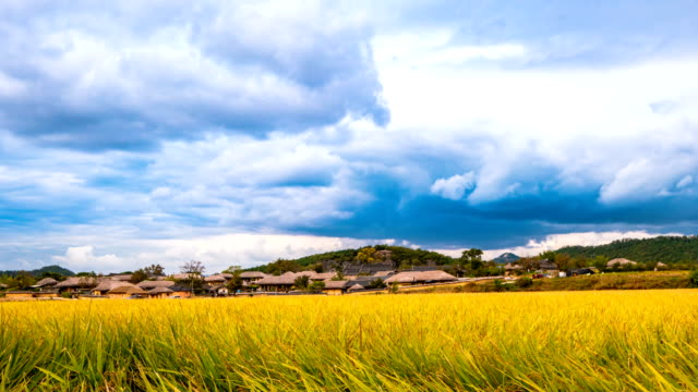 autumn landscape of field with yellow ripening rice in hahoe folk village (unesco world heritage site) - north gyeongsang province stock videos & royalty-free footage