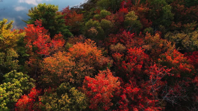 autumn landscape - autumn stock videos & royalty-free footage