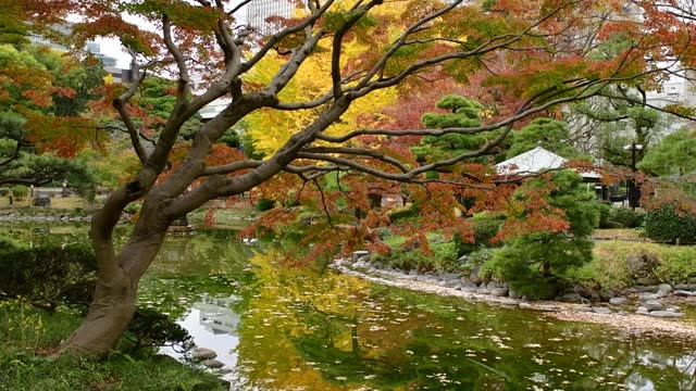 autumn leaf color of hibiya park, tokyo - satoyama scenery stock videos & royalty-free footage