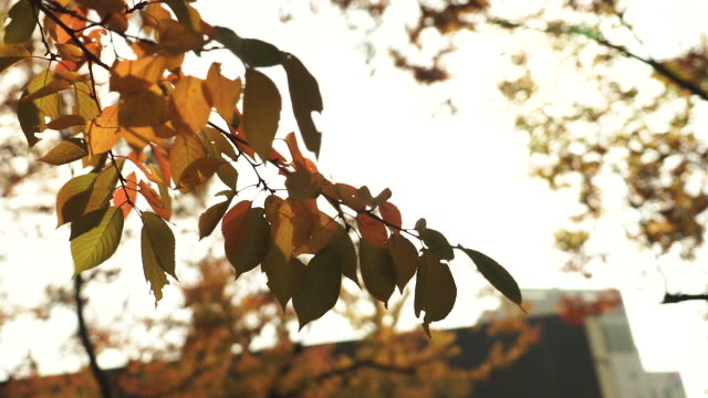 autumn leaf season in a forest - september stock videos and b-roll footage