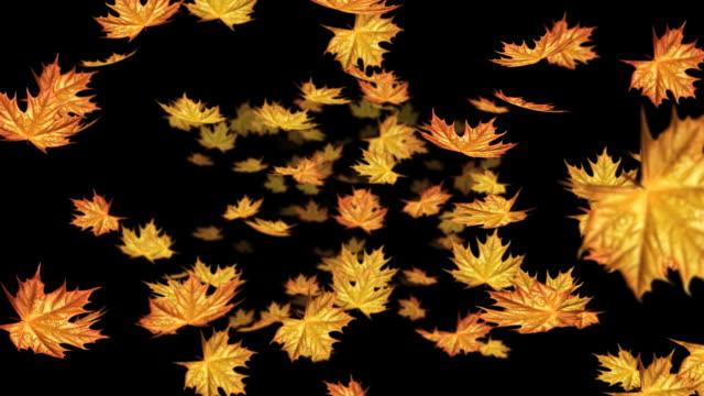 vídeos de stock, filmes e b-roll de folhas de outono caindo, circulares - ácer