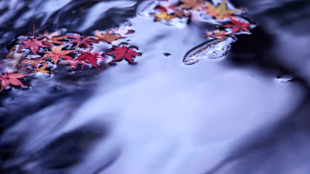 autumn leafs on waterfall - november stock videos & royalty-free footage