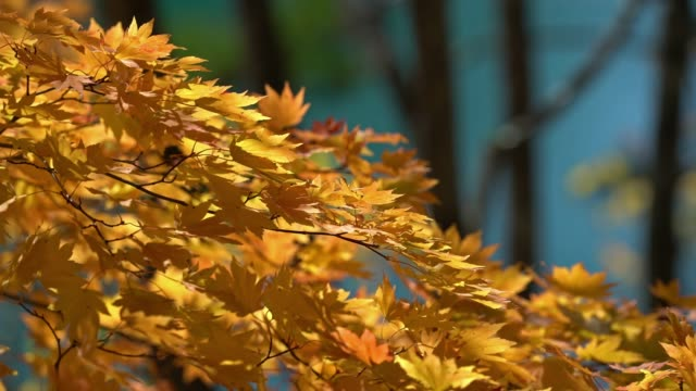 herbst urlaub hintergrund mit schönen sonnenlicht bei urabandai eher-numa teich, fukushima, japan - teich stock-videos und b-roll-filmmaterial