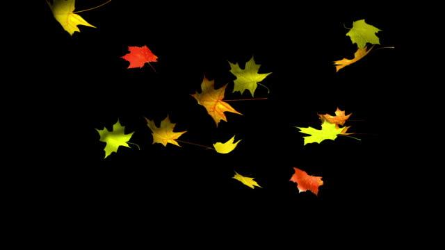 vídeos de stock e filmes b-roll de folhas de outono. alfa - ácer
