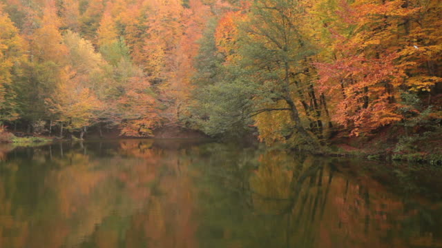 HD: Autumn Leaves and Lake