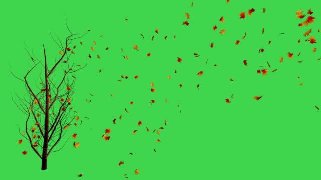 vídeos de stock, filmes e b-roll de folhas de outono e árvore - outono