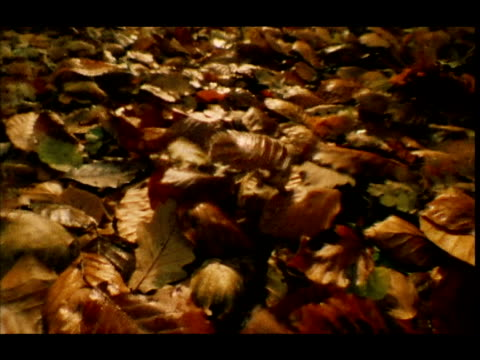 Autumn leaves are blown across forest floor