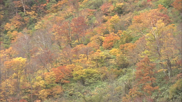 autumn leaves at shomyo falls, toyama, japan. - satoyama scenery stock videos & royalty-free footage