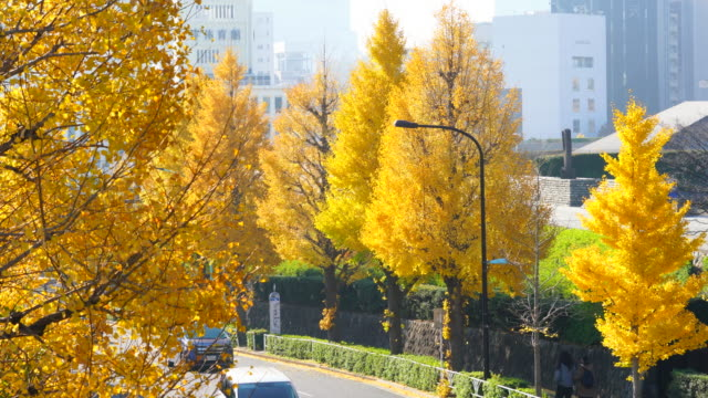 autumn leaves blow away from rows of ginkgo trees, which trees stand along both side of street and surround traffic at harajuku district shibuya tokyo japan on november, 29 2017. cityscape of foggy shibuya town can be seen behind. - treelined stock videos & royalty-free footage
