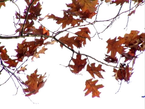 autumn leaves blowing in the wind. progressive frames - {{asset.href}} stock videos & royalty-free footage