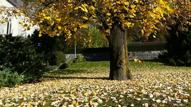 Herbst Blätter blowing in wind
