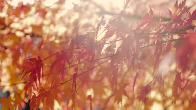 stockvideo's en b-roll-footage met herfstbladeren waait in de wind. - herfst