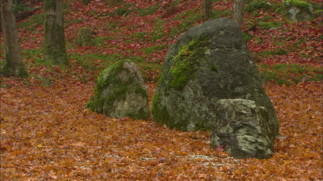 autumn leaves carpet the ground around mossy boulders. - boulder rock stock videos & royalty-free footage