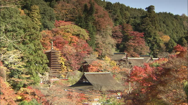 autumn leaves color the hills and trees near the danzan shrine in the nara prefecture in japan. tanzan shrine - pagoda点の映像素材/bロール