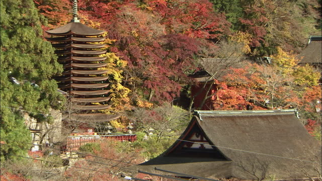autumn leaves color the trees near the danzan shrine in the nara prefecture of japan. tanzan shrine - pagoda点の映像素材/bロール