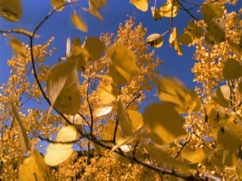 Autumn leaves dance in the wind.