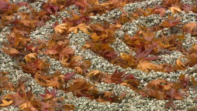 Autumn leaves demonstrate their color changes.