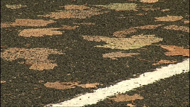 autumn leaves embed in new surface of london road england london ext traffic along over pattern of fallen autumn leaves embedded in newly surfaced... - asphalt stock-videos und b-roll-filmmaterial