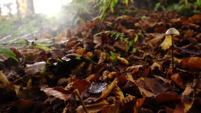 Autumn leaves fall down in the woods with fog and rain on a small mushroom