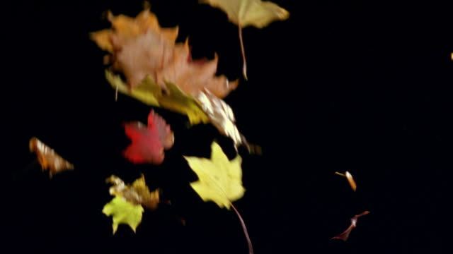 ms, autumn leaves falling against black background - foglia video stock e b–roll