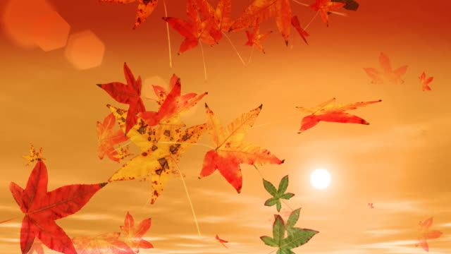 autumn leaves falling & sunset (hd loop) - maple leaf stock videos and b-roll footage