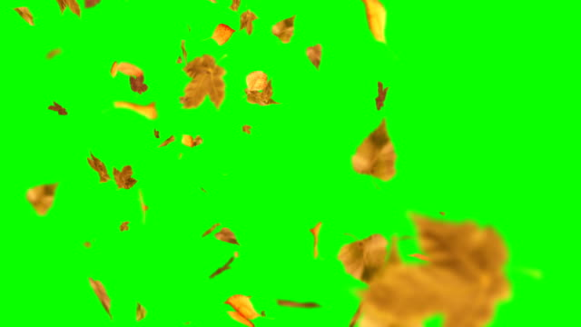 110 Autumn Leaves Object Videos And Hd Footage Getty Images