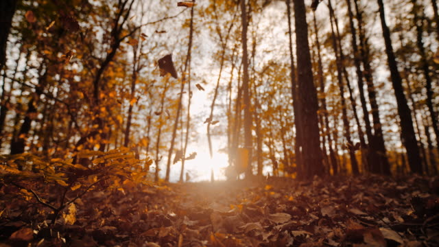 ms super slow motion autumn leaves falling in sunny, tranquil forest - woodland stock videos & royalty-free footage