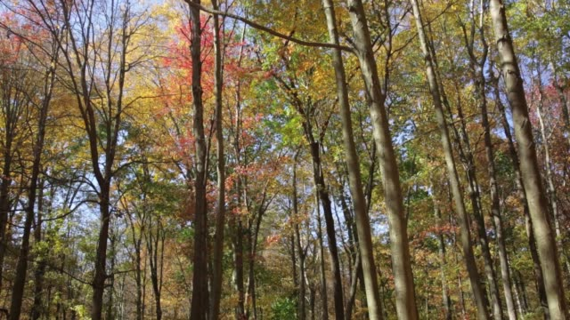 autumn leaves falling off trees as fall foliage comes to the hudson valley - hudson valley stock videos and b-roll footage