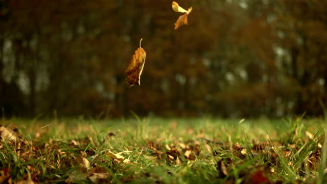 hd: autumn leaves falling on grass - falling stock videos and b-roll footage