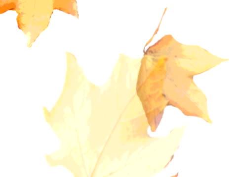 秋の落ち葉落ちる - 四つ点の映像素材/bロール