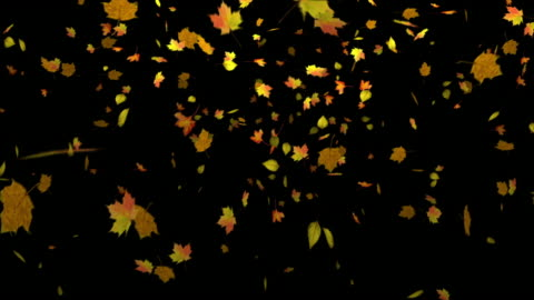 stockvideo's en b-roll-footage met autumn leaves falling with alpha matte - autumn