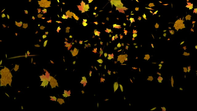 autumn leaves falling with alpha matte - falling stock videos and b-roll footage