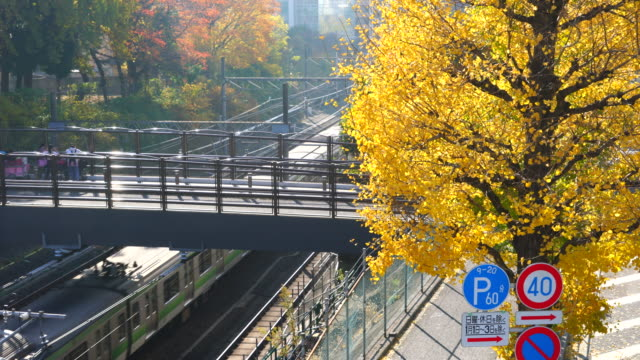 autumn leaves ginkgo trees stand along the jr railway track beside the pedestrian bridge that step over the railway at harajuku district  shibuya tokyo japan on november 29 2017. jr trains run under the bridge and people walk through. - treelined stock videos & royalty-free footage
