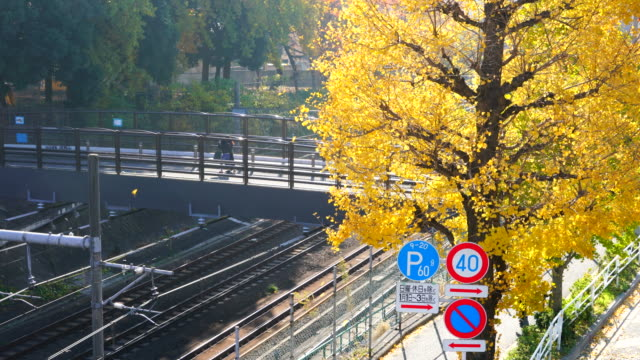 autumn leaves ginkgo trees stand along the jr railway track beside the pedestrian bridge that step over the railway at harajuku district  shibuya tokyo japan on november 29 2017. people walk on the bridge and sidewalk. - treelined stock videos & royalty-free footage