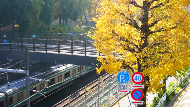 autumn leaves ginkgo trees stand along the jr railway track beside the pedestrian bridge that step over the railway at harajuku district  shibuya tokyo japan on november 29 2017. jr trains run under the bridge. - 郊外の風景点の映像素材/bロール