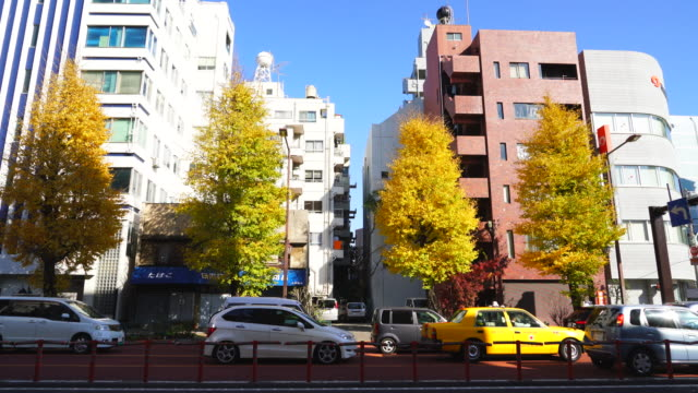 Autumn leaves Ginkgo trees stand along the street among residential buildings at Bunkyo-ku Tokyo on December 03 2017. Cars run on the tree-lined street.