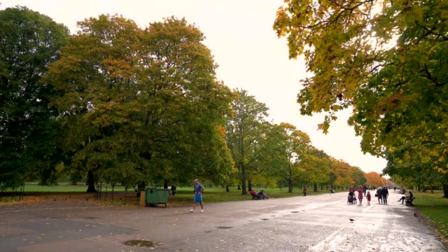 autumn leaves in kensington gardens on october 20, 2020 in london, england. - autumn stock videos & royalty-free footage