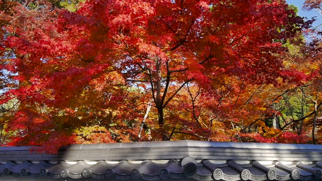 Autumn Leaves in Kyoto, Japan