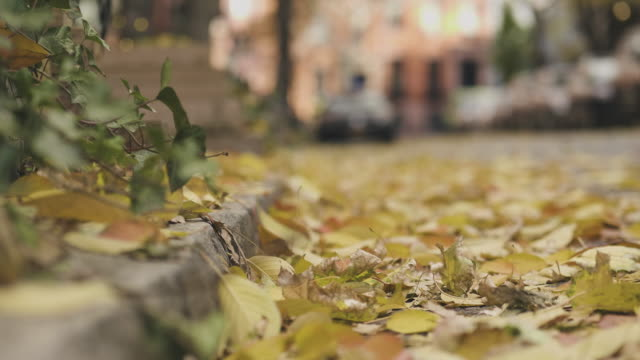 autumn leaves in new york city - pavement stock videos & royalty-free footage