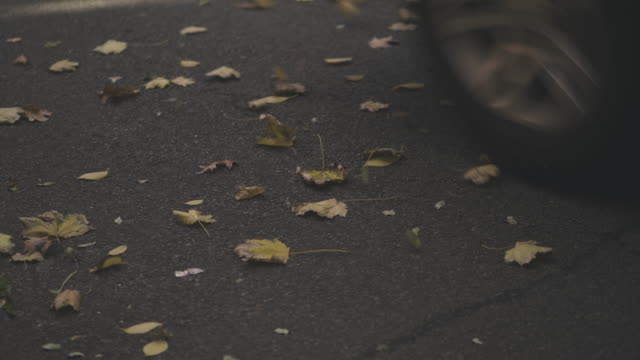 Feuilles d'automne à New York City